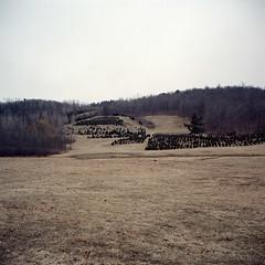 Untitled (Christmas Trees) (fusionlab) Tags: mediumformat landscape upstate squareformat mamiya6