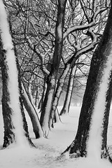 Winter Lines (PeteZab) Tags: nottingham uk winter england blackandwhite bw snow tree texture monochrome weather season mono spring branch framed arbor trunk baum sherwood 2013 woodthorpepark canoneos50d petezab peterzabulis sigma1770f284dcmacroos 521in2013
