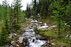 June Mountain Running Creek (pokoroto) Tags: june mountain running creek  alberta canada  6   rokugatsu minazuki monthofwater 2016 28 summer