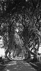 Contax Tix  |  Fuji Nexia 200  |  Dark Hedges, NI (Frank Milling) Tags: irish ireland contax tix film aps fuji fujifilm nexia 200 iso a200 outdoors light sky scenery game thrones dark hedges northern ni