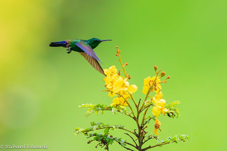 Hummingbird #  explore