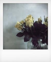 (saffraanenviolet) Tags: flowers instamatic iphone poetry bloemen happiness floral