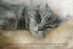 Talento... (musymas) Tags: musymas petunia gato cat textura