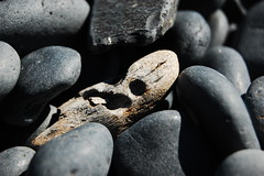 Driftwood (laurelpattee) Tags: wooden texture rocks stones stone rock wood holes beach cobble yaquina newport