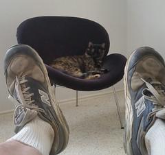 fur elise (joshhikes) Tags: 201609121449531 cat elise feet
