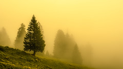 Stand Out (marco soraperra) Tags: nikon nikkor landscape trees nebbia fog poetic sky yellow atmosphere grass nebel baum berg gras tanne