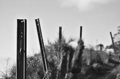 Straight Iron (Kiwi Jono) Tags: pentax pentaxk5 smcpda70f24 iron retaining fence angles