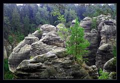 Prachovsk skly - z punktu widokowego :) (Renata_Lipiska) Tags: czechparadise czeskiraj gry rocks gra rock widok landscape drzewo drzewa tree trees las forest wycieczka travel climbing wspinaczka outdoor serene rockformation
