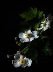 ... (chang_j1) Tags: couleur extrieur fleurs feuillage