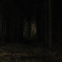 Paths of Light (Netsrak) Tags: wald forst forest woods tree trees baum bume dark darkness dunkel dunkelheit leaves leaf blatt bltter light licht shadow schatten outdoor nature natur landscape landschaft