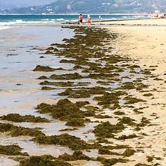 Algas (sergey.perm) Tags: spain espaa andalucia cadiz tarifa loslances playa algas