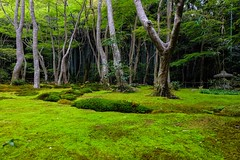Gio-ji IV (Douguerreotype) Tags: garden green shrine buddhist temple kyoto moss japan tree