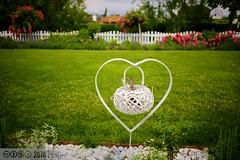 PLW_5598 (Laszlo Perger) Tags: wien vienna sterreich austria blumengarten hirschstetten flowergarden