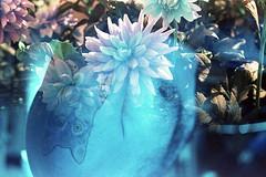 film (La fille renne) Tags: film analog 35mm lafillerenne minoltax700 50mmf2 lomography lomochrome lomochrometurquoise lomochrometurquoisexr100400 turquoise mx doubleexposure multipleexposure splitzer ebs exposingbothsidesofthefilm blue flowers skin man tattoo ink faceless body