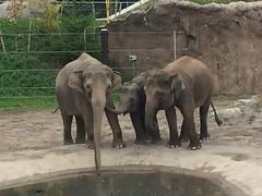Oregon Zoo (sensoredmedia) Tags: portland oregon oregonzoo zoo forestpark lions elephants seals baboons totempole