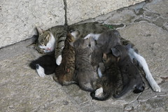 Balchik - Feeding in the Dvoretsa (lyura183) Tags: bulgaria  balchik  cat kitten