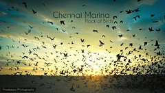 Chennai Marina Beach (Pradeepa Pandiyan) Tags: chennai chennaimarinabeach chennaibeach marinabeach beach sand birds sea sunrise tamilnadu india photography pradeepa pandiyan