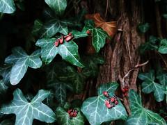 Wolfgang-Hanau Forest, Germany (asterisktom) Tags: rotelache wolfgang hanau forest wald bug 2016 trip2016kazakheuro july germany phone