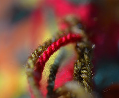 Strands of wool in a row (Snowflake110) Tags: macromonday inarow wool strands colours macro nikon