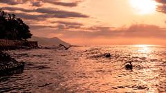 Dorados reflejos (David Ruiz Luna) Tags: sunset sea southamerica birds coast day cloudy venezuela caribbean choroní puertocolombia americadelsur blinkagain bestofblinkwinners blinksuperstars bestofsuperstars henripittiernationalparc blink4gallery
