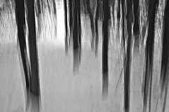 Dickicht (ebergcanada) Tags: winter snow abstract tree forest icm millcreek blackwhitephotos