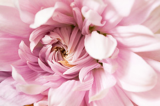 Pink whirlpool