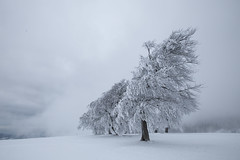 lee (crazyhorse_mk) Tags: snow cold tree nature fog clouds germany landscape lee baden schwarzwald blackforest soundtrack schauinsland columb badenwuerttemberg electricorange stohren giesshuebel windbeech