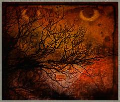 Eyes Everywhere (Dave Linscheid) Tags: tree texture eyes textured blinkagain bestevercompetitiongroup besteverdigitalphotography