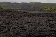 Lava Flow (Tim Conway) Tags: park winter usa rock america island kalapana volcano hawaii lava islands town big december pattern pacific united rope fresh national hawaiian hi shield swirl states bigisland volcanoes geology roadclosed volcanic plain destroyed recent swirly kilauea basalt pahoehoe runny geological igneous volcanoesnationalpark lavaflows evacuated basaltic ropey 2013 easternriftzone kupalanahalavashield kupalanaha paehoehoe