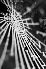 Frozen Silk (Nomadic-Imagery) Tags: blackandwhite macro ice monochrome frozen dof freezing depthoffield cobweb iced spidersweb cobwebs canoneos50d 12mmkenkoextensiontube canon70200mmf4lislens