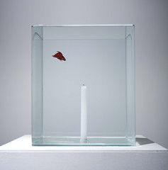 Untitled _ Candle, Fish, Water, Mixed media _ Dimensions variable