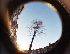 Shooting in to the sun (CardiganKate) Tags: blue houses sky distortion tree film sunshine lomography brighton glare fisheye flare 110mm fisheyebaby wwwkatebenjamincom