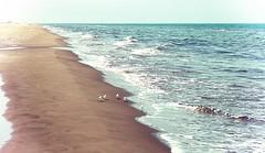 Birds Shore (Mireiacr4) Tags: blue sea birds azul mar delta playa arena pjaros shore verano blau olas vacaciones platja espuma ocells mediterranian deltadelebre