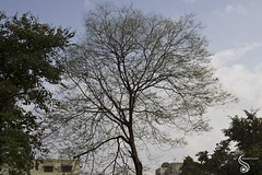 Anatomy of the Tree (Shikher Singh) Tags: winter tree branches anatomy shikhersimagery