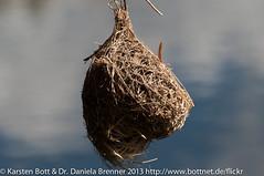 """Nest des Webervogels • <a style=""""font-size:0.8em;"""" href=""""http://www.flickr.com/photos/56545707@N05/8431484991/"""" target=""""_blank"""">View on Flickr</a>"""