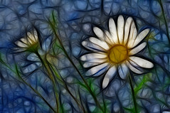 Fractal Daisy (dtwigg98) Tags: blue white ontario canada abstract flower nature photoshop artistic hamilton daisy topaz cs5 fractalius