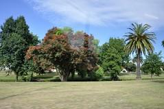 DSC_7532 (citywalker) Tags: newzealand january napier 2013