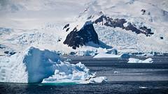 IMG_2702 (ravas51) Tags: blue snow ice antarctica seal iceberg icebergs southshetlandislands crabeaterseal gadventures