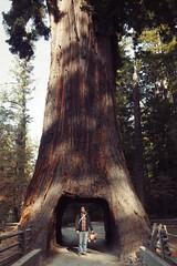 Roadtrip to Portland (laurenlemon) Tags: roadtrip olympus olympuspen october12 redwoodforest ryanschude laurenrandolph laurenlemon wwwphotolaurencom