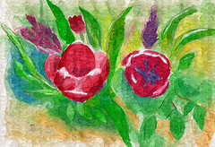 Tulips filtered 1 (Helanker) Tags: stilllife watercolor fineart finaart neocolors