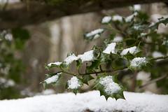 Carrascu con nieve (Caliaetu) Tags: asturias asturies caso caleao casu caliao pelcaminasturias