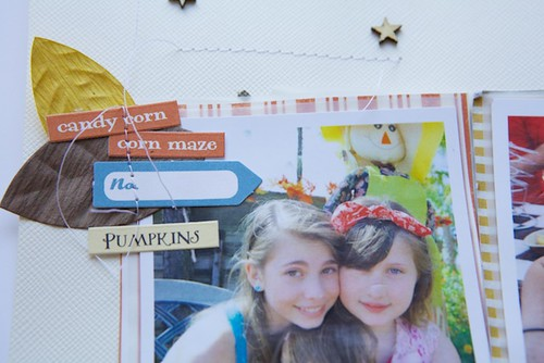 pumpkin patch tags