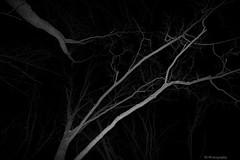 On a dark night Explore March 4 (jaros 2(Ron)) Tags: trees winter night nikon tokina nightshots tokina111628 nikond300s