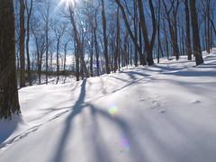 Snow & Lens Flare