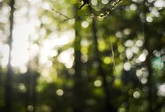 lost in the light (manyfires) Tags: trees light summer green oregon forest portland landscape bokeh hiking web spiderweb hike cobweb pacificnorthwest pdx pnw forestpark strands