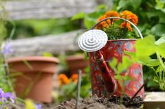 DSC_1131a (Fransois) Tags: summer green garden quiet jardin vert calm sillon t wateringcan freshness calme furrow arrosoir fraicheur