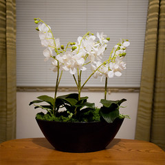 Day Twenty One / Year Two. (evilibby) Tags: white orchid green table artificial livingroom replica curtains hemma project365 artificialorchid replicaorchid