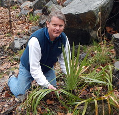 Erik kneels before Sabal palm (drterdal) Tags: palm palmetto sabal mccurtain sabalminor coldhardy