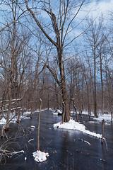 K7_14360_ (Bob West) Tags: winter ontario ice k7 rondeauprovincialpark southwestontario bobwest pentax1650f28