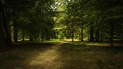 Solitude Forest. (Grf f the Pp [@Grfbd]) Tags: trees summer nature forest alone